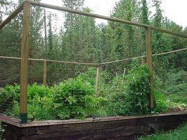 deer-proof-fence